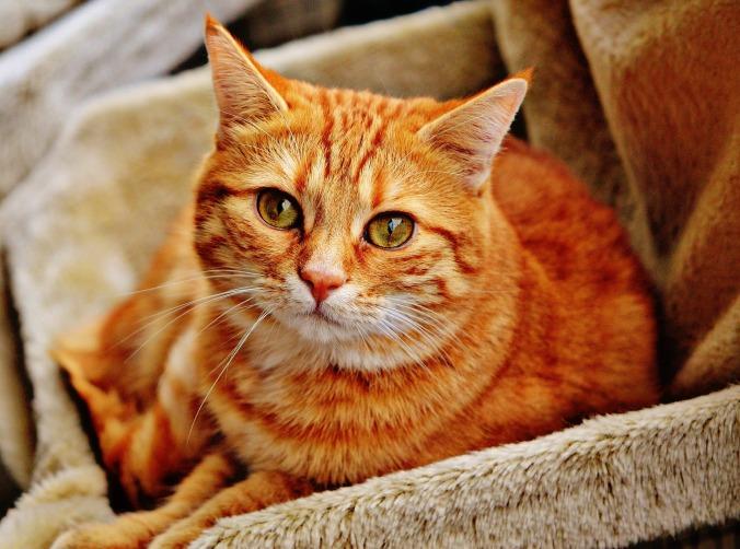 cat-1046544_1920